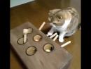 Гениальная игрушка для кота. Развлеки себя сам