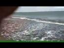 На Байкале на турбазу на о Ольхон прибило несметное число сдохшего омуля Снимающий видео ржет ему весело Народ набирает рыбу