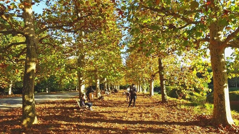 Autumn Relaxing Walk in Tokyo Shinjuku Gyoen Garden - 4K UHD
