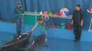 Условия содержания дельфинов в карадагском дельфинарии вызвали вопросы у общественников