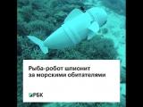 Рыба-робот шпионит за морскими обитателями