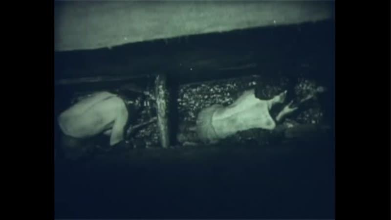 Химия Научфильм 9 Менделеев bvbz yfexabkmv 9 vtyltkttd