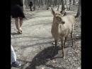 Как я кормил оленей. Видео Александра Рогожкина