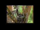 Перелетные птицы Детям про птиц