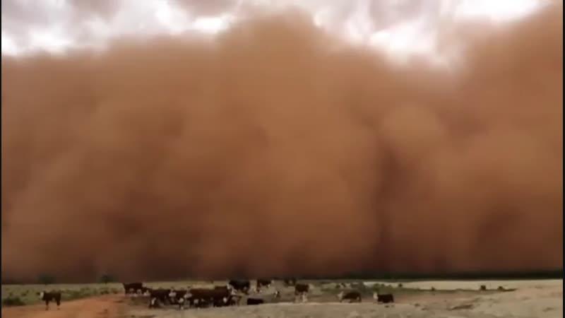 1904 Австралия. Песчаная буря. Штат Новый Южный Уэльс, город Даббо. 31 декабря 2018.