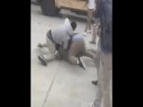 mass brawl niggers