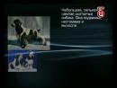 Д/С Собаки: Английский кокер-спаниель (2006г)