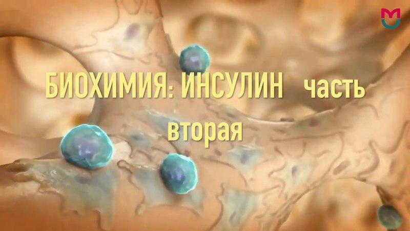 Биохимия Инсулин 2 часть bj bvbz bycekby 2 xfcnm