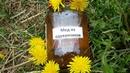 Мед из одуванчиков или одуванчиковое варенье