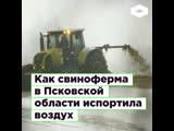 Как свиноферма в Псковской области портит жизнь местным жителям | ROMB