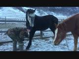 Пытаемся поставить коня на трапецию) кфх Леон.