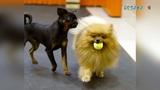 Маленькая фотосессия на занятиях с собаками Собака я