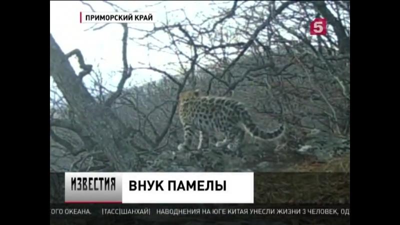 Памелу Андерсон обрадовала новость из Приморья о пополнении у её подопечной самки леопарда