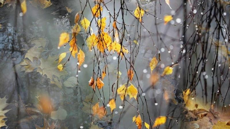Когда я смотрю на летящие листья / Стихи- Марина Цветаева, муз. и исп.- Елена Подус