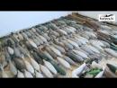 САА обнаружила тайник оружия в пр Homs