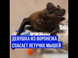 Девушка спасает летучих мышей