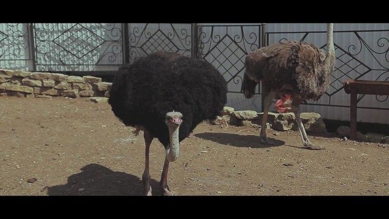 Идем в зоопарк часть 1,веселое видео для всей семьи про животных и зоопарк Арина гуляет в зоопарке.