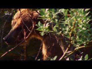 NG: Планета хищников. Идеальные убийцы (2016) HD 1080