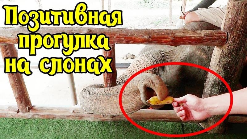 Очень позитивная прогулка на Слонах