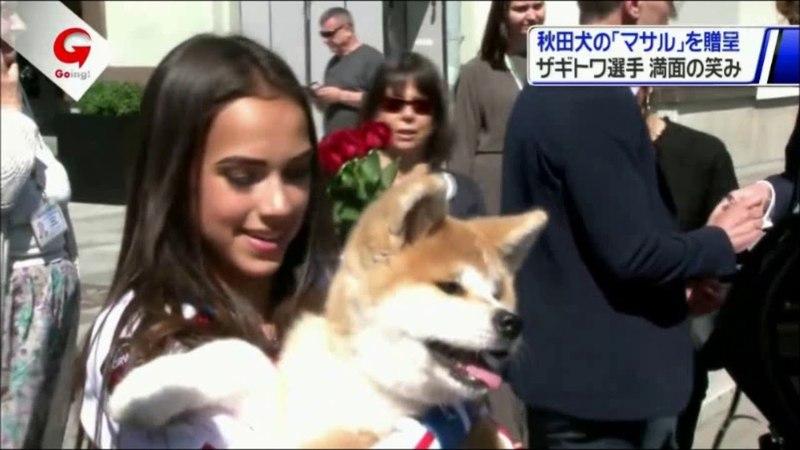 アリーナ・ザギトワの秋田犬 MASARU マサル の贈呈式「 65297