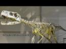 О первых динозаврах и о том, как они не стали последними
