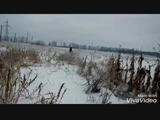Охота с ягдтерьером (480p).mp4