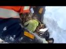 В лютый мороз вахтовики спасли щенка из снежного плена