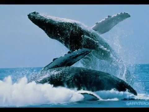 Плачь китов Жан Мишель Жарр