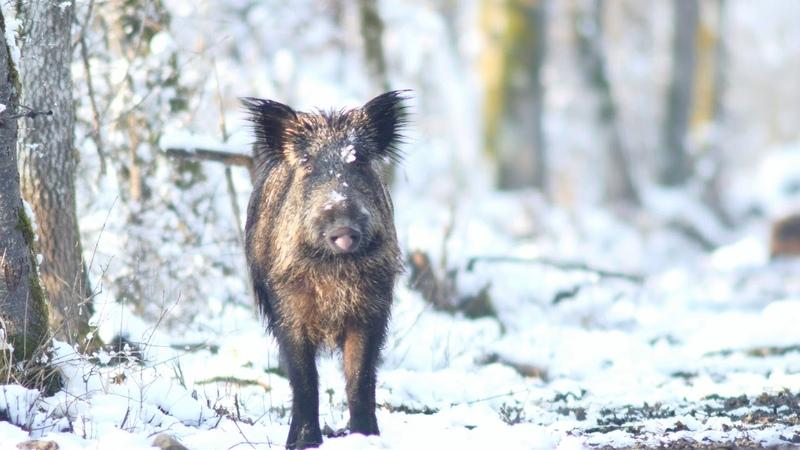 Animaux sous la neige en foret de Fontainebleau