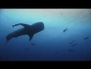 Королевство океанов Народ Великой Синевы - Kingdom of the OceansHD