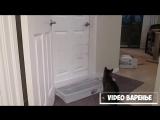 Кот открывающий двери (VIDEO ВАРЕНЬЕ)
