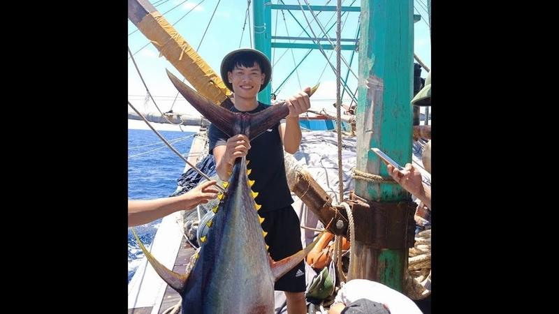 Cận cảnh đàn cá ngừ khổng lồ- nhật ký đi biển 9