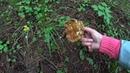 В лес по грибы 18 авг. 2018г Вроде бы начинаются. Часть 1/2