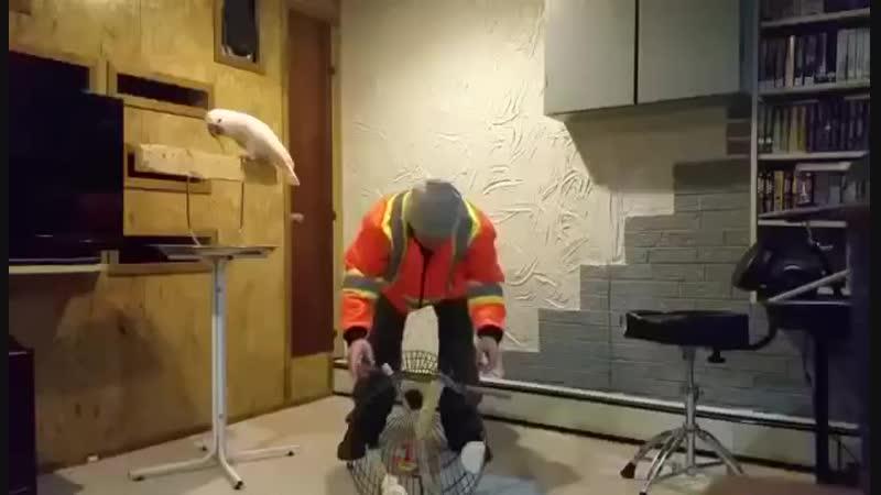 злой папугай