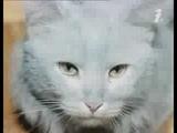 Фантазии Веснухина - Голубой кот (Поёт Алла Пугачёва, 1977)