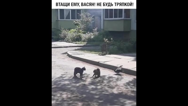 Коты и ворона