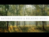30 Minutes Of Relaxing Music With Birds Singing and Water Sound -Nature Sounds For Meditation