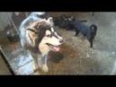 Уфимка ютится в ветхом доме на окраине города с 56 собаками