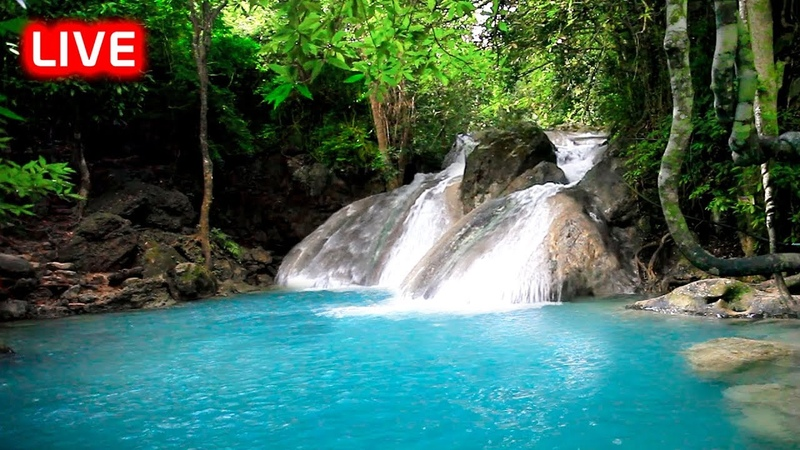 Relaxing Nature Sounds: Tropical Rainforest Waterfall Sound for Sleeping, Meditation, Relax Studying