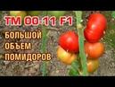 ТМ 00-11 F1 - БОЛЬШОЙ ОБЪЕМ ПОМИДОРОВ С ОБАЛДЕННЫМ ЦВЕТОМ (12-06-2018)