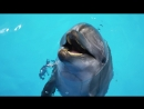 Дельфины в DOLPHIN PLANET