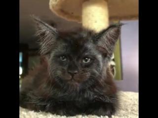 это я Лёха, помогите мне выбраться из кота