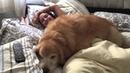 Fat dog wont let human get up