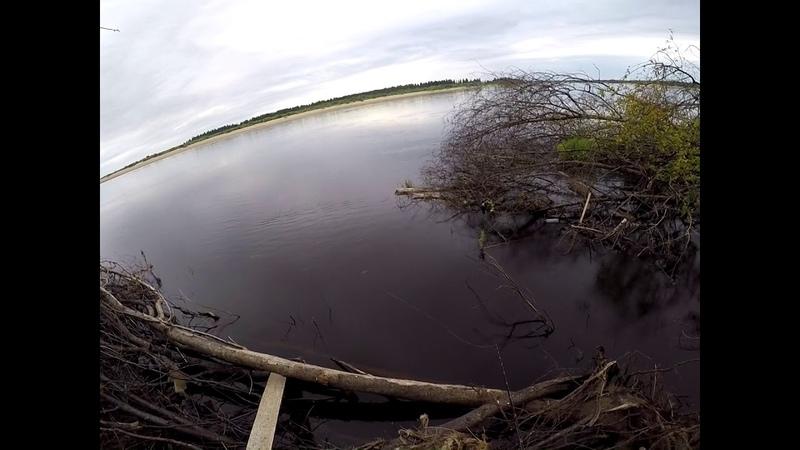 Рыбалка на реке Вага Архангельская обл 2018 второй и третий дни