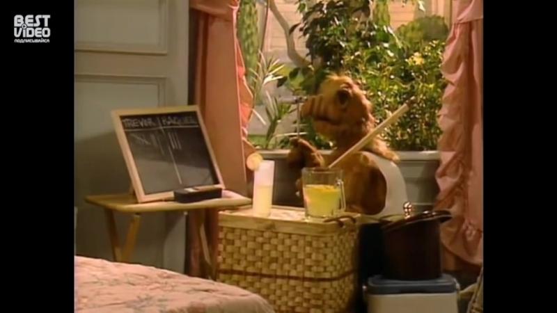 Альф Нарезка весёлых моментов хорошее настроние юмор смешное видео комедия отрывки из сериала семья забота веселье дом