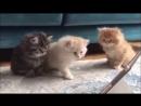 Котята смотрят СМУРФИКИ