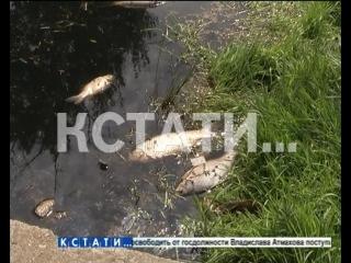 Массовый мор рыбы и черная вода - экологическое бедствие в Березовой пойме