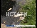 Массовый мор рыбы и черная вода экологическое бедствие в Березовой пойме