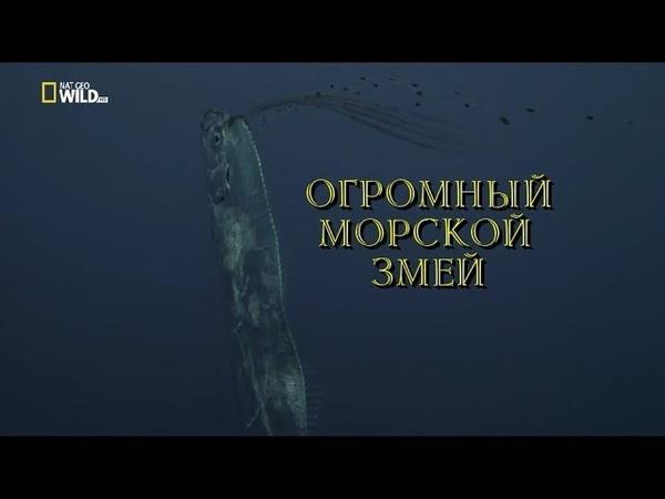 Nat Geo Wild: Огромный морской змей (1080р)