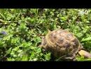 Черепаха прошла 6 км